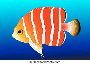 Colorful Marine Fish