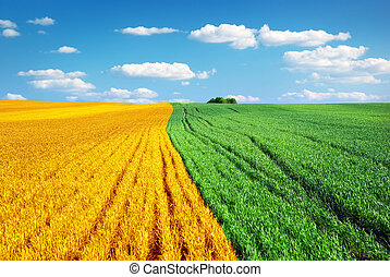 Big colorful meadow. Nature conception.