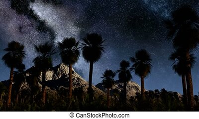 Colorful milky way and tropical landscape with palms....