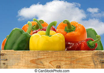 colorful mix of paprika's(capsicum) in a wooden box against ...