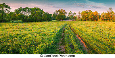 Colorful morning panorama of the spring meadow