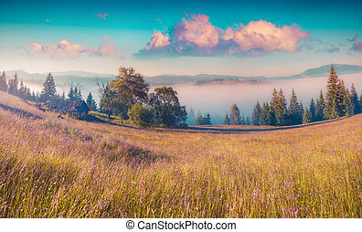 Colorful morning scene in the mountains - Colorful summer...