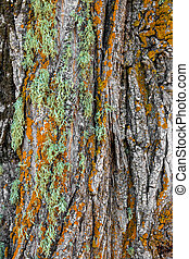 Colorful moss on a tree