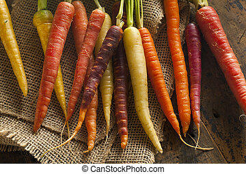 Colorful Multi Colored Raw Carrots on a Background