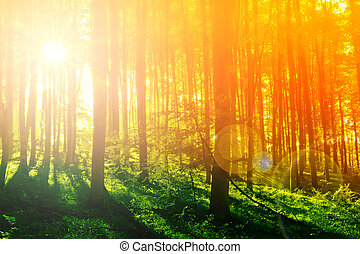 Colorful mystical forest with sun ray at morning