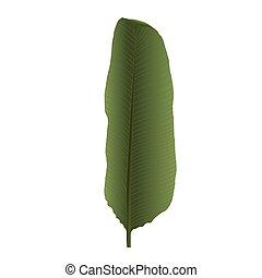 Colorful Naturalistic Palm Leaf. Vector Illustration.