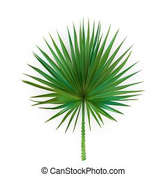 Colorful naturalistic silhouette of leaf Libistones of Chinese, Southern palm. Vector Illustration.