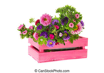 New England Asters - Colorful New England Asters in pink ...