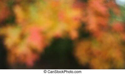 Colorful Oak leaves Fall Season