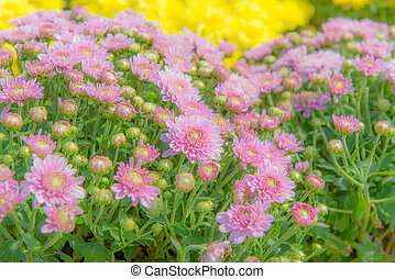 colorful of flower in the beautiful garden