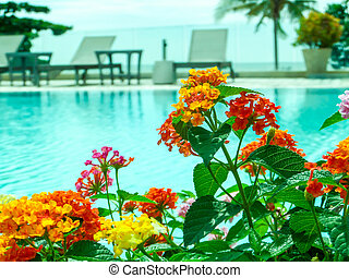 colorful of lantana camara mix light pink orange white magenta in the swimming pool