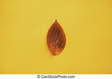 Colorful orange and yellow frame made of autumn leaves