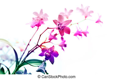 Colorful orchids, flower vibrant concept and soft focus