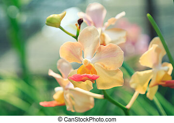Colorful orchids in the garden with color filter