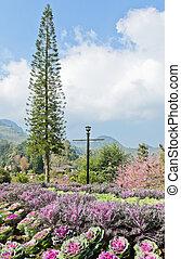 Colorful ornamental garden