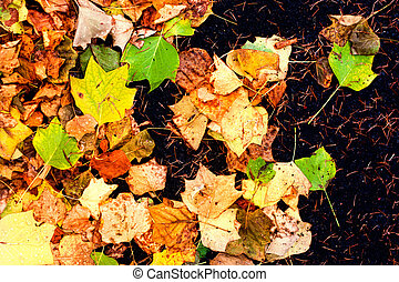 Colorful Outdoor autumn concept. Autumn background with leaves.