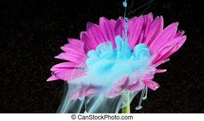 Colorful paint ink flows a flower into the water
