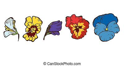 Colorful pansies flowers isolated on white background. Floral vector.