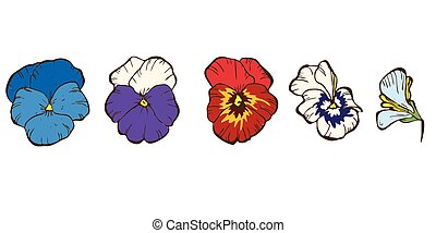 Colorful pansy flowers isolated on white background. Floral vector.