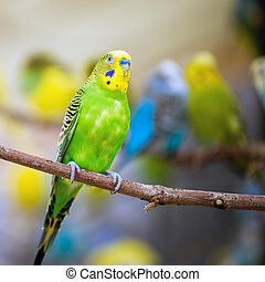 Colorful parakeet resting on tree branch
