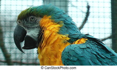 Colorful parrot closeup