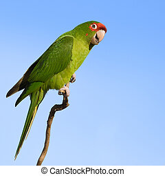 Colorful parrot. - Colorful parrot looking at the camera ...