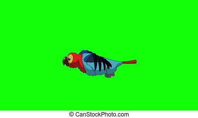 Colorful Parrot Flies