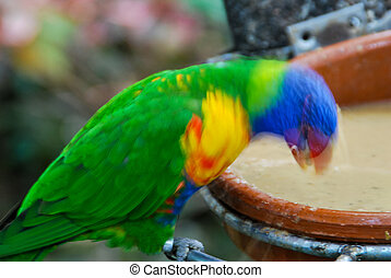 colorful parrot on a branch, digital photo picture as a background