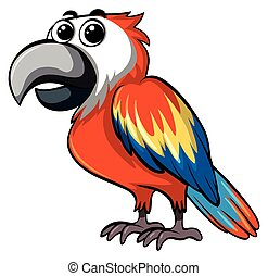 Colorful parrot on white background