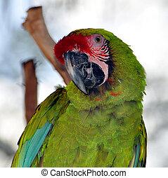 Colorful parrot.