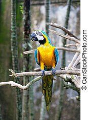 Colorful Parrot Sitting On A Branch