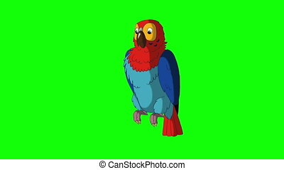 Colorful Parrot Talks