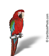 colorful parrot with shadow isolated over white