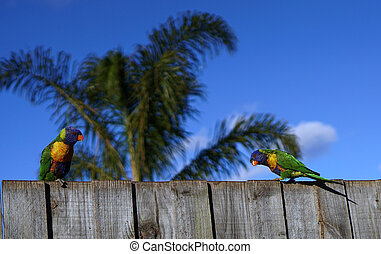 Colorful parrots with palm tree and blue sky background