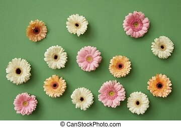 Colorful pattern from gerberas, appear on a green background...