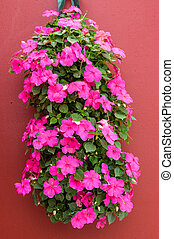 Colorful pink impatiens in hanging container