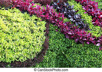 Colorful plants background. - A decorative wall arrangement...