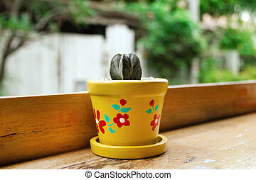 Colorful pot with cactus on a wooden table in a cafe.