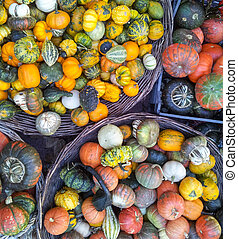 Colorful pumpkins background