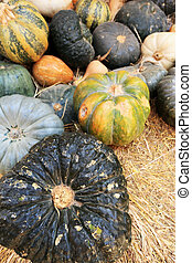 Colorful pumpkins collection on the farm