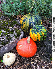 Colorful pumpkins decorating an autumn garden