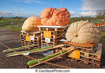 Colorful pumpkins