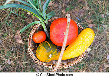 Colorful pumpkins in wicker basket outdoors