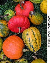 Pumpkins on the grass