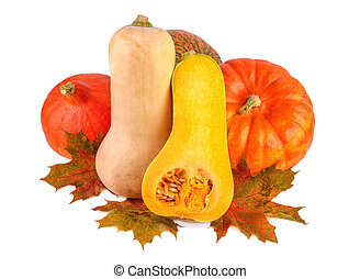 Colorful pumpkins with fall leaves. Different squash isolated on white.