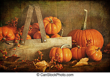 Colorful pumpkins with wood background