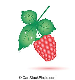 colorful raspberry summer fruit with leaf eps10