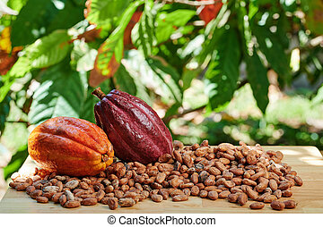 Colorful raw cacao fruits
