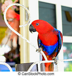Colorful Red-and-green Macaw