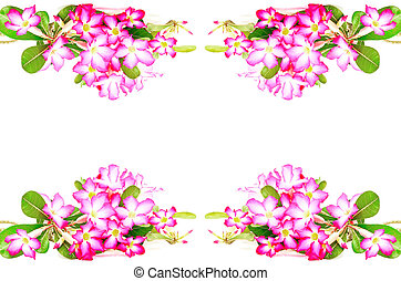 Impala Lily - Colorful red flower, Desert Rose-Impala Lily- ...